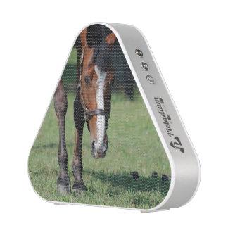 Gorgeous Quarter Horse Speaker
