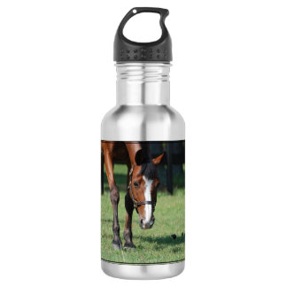 Gorgeous Quarter Horse Stainless Steel Water Bottle