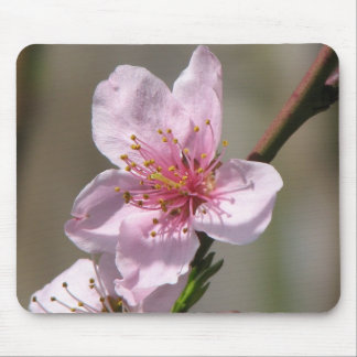 Gorgeous  Raspberry Bloom Mouse Pad