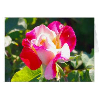 Gorgeous Rose Card