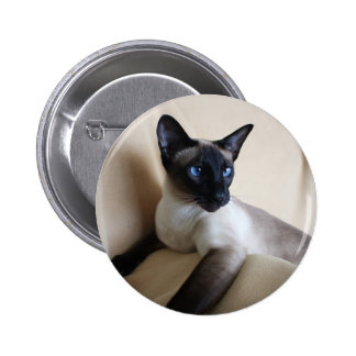 Gorgeous Siamese Cat Face 2 Inch Round Button
