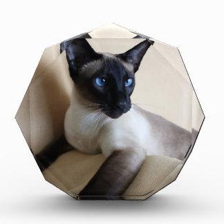 Gorgeous Siamese Cat Face Award