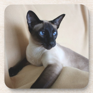Gorgeous Siamese Cat Face Drink Coaster