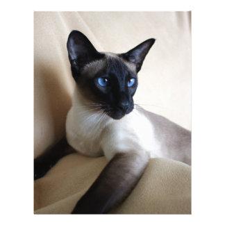 Gorgeous Siamese Cat Face Letterhead