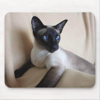 Gorgeous Siamese Cat Face Mouse Pad