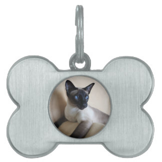Gorgeous Siamese Cat Face Pet Tag
