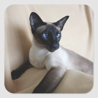 Gorgeous Siamese Cat Face Square Sticker