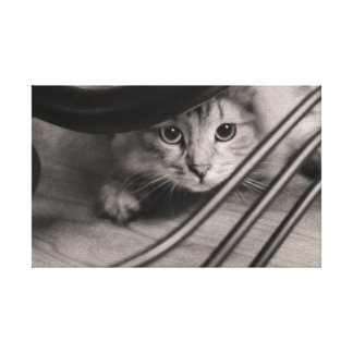 Gorgeous Siberian Cat on Canvas