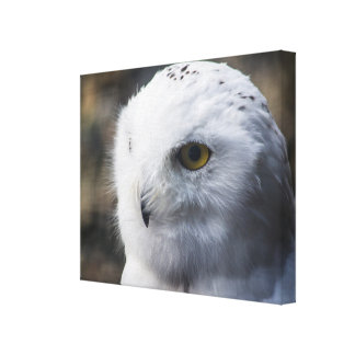 Gorgeous Snowy Owl Wrap Around Canvas Print