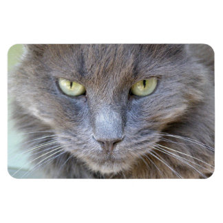 Gorgeous Staring Gray Cat with Green Eyes Magnet