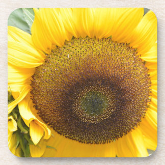 Gorgeous Sunflower Beverage Coasters
