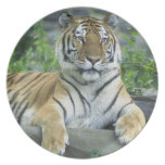 GORGEOUS TIGER MELAMINE PLATE