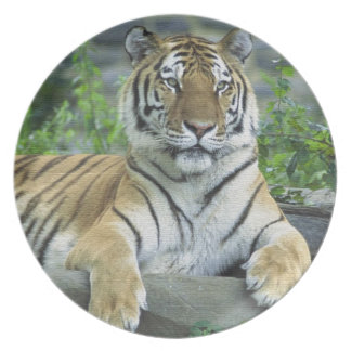 GORGEOUS TIGER DINNER PLATES