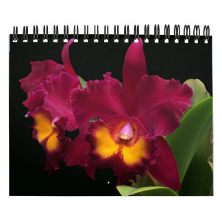 Gorgeous tropical blooming orchid flowers 2015 calendar