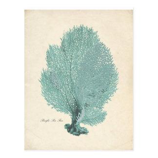 Gorgeous Turquoise/Aqua Pacific Sea Fan Postcard