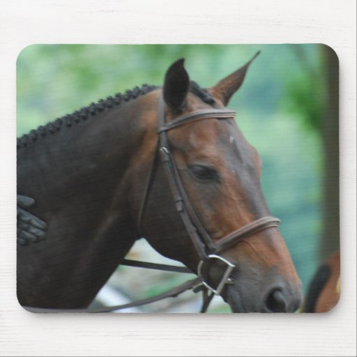 Gorgeous Warmblood Horse Mouse Pad