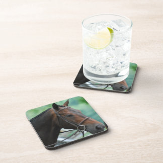Gorgeous Warmblood Horse  Set of Coasters