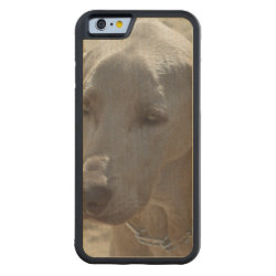 Carved ® iPhone 6 Bumper Wood Case with Weimaraner Phone Cases design