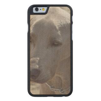 Gorgeous Weimaraner Carved® Maple iPhone 6 Slim Case