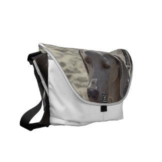 Gorgeous Weimaraner Courier Bag