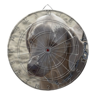 Gorgeous Weimaraner Dartboard With Darts