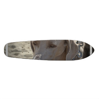 Gorgeous Weimaraner Skateboard