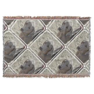 Gorgeous Weimaraner Throw Blanket