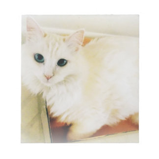gorgeous white cat notepad
