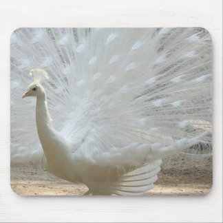 gorgeous white peacock mouse pad