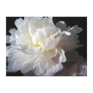 Gorgeous White Peony Blossom Canvas Print