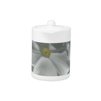 Gorgeous White Phlox Flower Design
