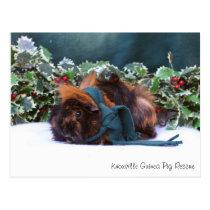 Gorgeous Winter Guinea Pig Postcard