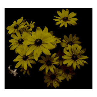 Gorgeous Yellow Daisies Dark, Old World Style Poster