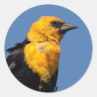 Gorgeous Yellow-Headed Blackbird on a Windy Day Classic Round Sticker