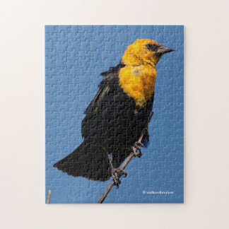 Gorgeous Yellow-Headed Blackbird on a Windy Day Jigsaw Puzzle