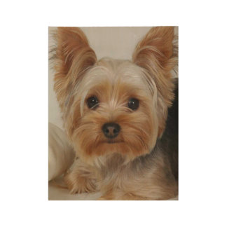 Gorgeous Yorkshire Terrier Wood Poster
