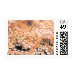 Gorgonian coral 2 postage stamps