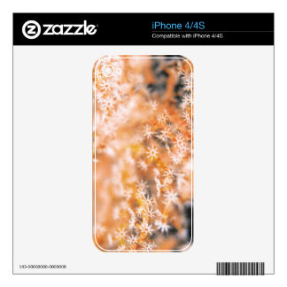 Gorgonian coral 2 skin for iPhone 4