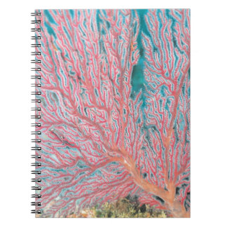 Gorgonian coral 3 notebook