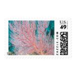 Gorgonian coral 3 postage stamp