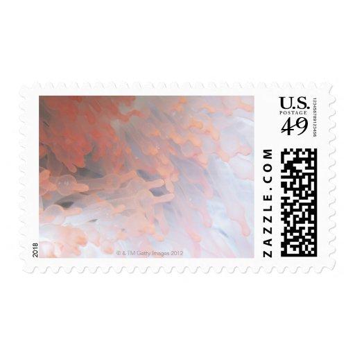 Gorgonian coral 4 stamp