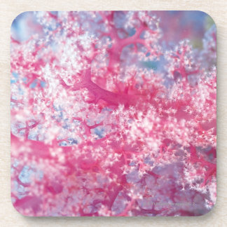 Gorgonian coral beverage coaster
