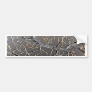 Gorgonian coral bumper sticker