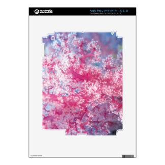 Gorgonian coral decal for iPad 3
