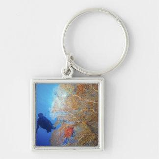 Gorgonian sea fan, Subergorgia mollis, with Keychain
