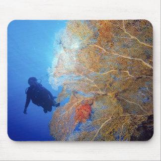 Gorgonian sea fan, Subergorgia mollis, with Mouse Pad