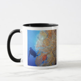 Gorgonian sea fan, Subergorgia mollis, with Mug