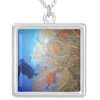 Gorgonian sea fan, Subergorgia mollis, with Silver Plated Necklace