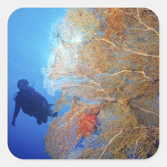 Gorgonian sea fan, Subergorgia mollis, with Square Sticker