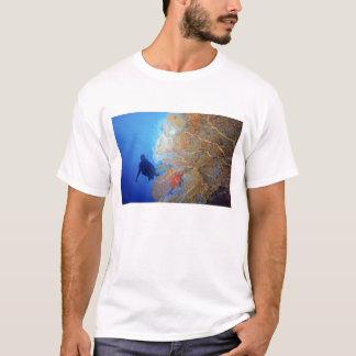 Gorgonian sea fan, Subergorgia mollis, with T-Shirt
